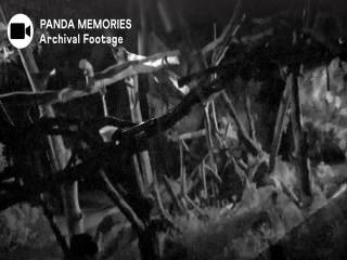 zssd-panda